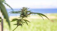 CanCoin: A Solution For The Growing Legal European Cannabis Market